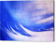 Feather Acrylic Print featuring the photograph Blue Marvel. Lighten Your Day With Music by Jenny Rainbow Texture Words, Picture Comments, Acrylic Artwork, Multiple Exposure, Acrylic Sheets, Mix Media, How To Be Outgoing, Fine Art Photography, Clear Acrylic