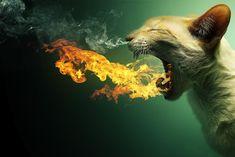 Dragon Cat - Photo Manipulations of Animals
