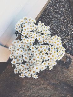 Daisies are my secret favourite flowers. Simple & Sweet <3