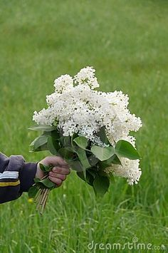 White lilac bouquet!