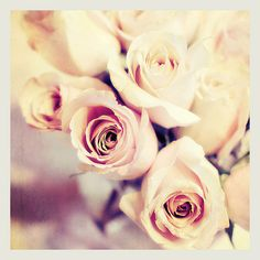 Fine Art Photography 8x8 Pink Roses