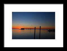 sunset, birds, pier, silhouette, water, pineland, florida, nature, migration, landscape, michiale schneider photography
