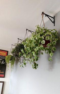 5 tipos de plantas ideais para ter em vasos pendentes dentro de casa - Blog de decoração faça você mesmo - Casa de Firulas