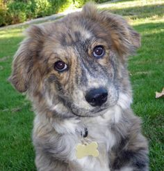 What a gorgeous dog!
