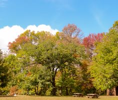 Autumn picnic at Shakamak State Park in Indiana captured by Wandering Ways Photography 2016