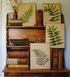 Einfach dekorative Farnwedel auswählen, in ein Buch legen, (zwischen der Buchseite und Farnwedel Papier legen) dann viele schwere Bücher darauf legen. Nach einigen Tagen, die gepressten Farnwedel in einen Bilderrahmen kleben und schon hat man eine originelle Dekoration #farn #diy #pflanzenfreude