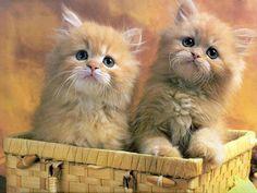 süße Baby Tiere gern katzen