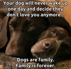 Dogs are ohana. Ohana means family. Family means nobody gets left behind or forgotten.