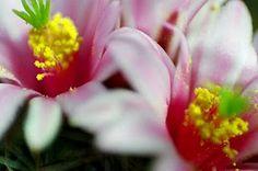 ABC das Suculentas: SÓ ACREDITO VENDO!!! A inacreditável beleza das flores.