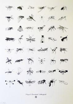 Chrysa-Koukoura-Winged-Terrestrial-Anthropods