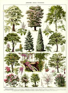 Tree botanical poster 1936 Vintage Botanical art Tree print vintage French country decor, small poster Picture of trees pictures of gardens - Tree botanical poster 1936 Vintage Botanical art Tree print vintage French country decor Picture of - Vintage Botanical Prints, Vintage Art Prints, Botanical Art, Botanical Posters, Botanical Gardens, Illustration Botanique Vintage, Impressions Botaniques, Picture Tree, Poster Pictures