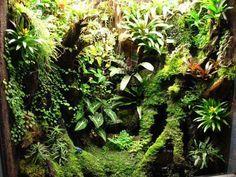 оформление Gecko Terrarium, Aquarium Terrarium, Reptile Terrarium, Succulent Terrarium, Reptile Cage, Reptile Enclosure, Reptile Habitat, Gecko Vivarium, Carnivorous Plants
