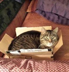 Lily in a tiny box