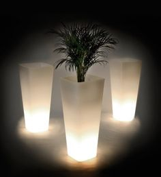 light up your plants