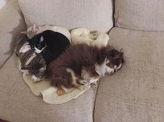 こないだ学校から帰ってきたらこれ!😍みんなかたまって寝てたの!寒かったのかな??こんなの初めてみてたくさん写真撮った🤳 意外と仲良しみたいで…❤︎ #愛犬#ベル#愛猫#サン#シロ#クロ#意外と仲良し