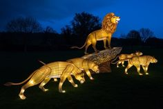 (PHOTO: VisitEngland) England's best places to get into the Christmas spirit: Join the winter spectacular at Longleat's Festival of Light, Wiltshire (Bringing the curtain down on the safari park's 50th birthday celebrations in remarkable style, this eye-catching event will take the age-old tradition of the Chinese lantern and transform it for today's modern audience, using around 40 types of animals and 2,500 individual lanterns. ...)