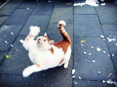 Sandra Deichmanns Katze fängt den Schneeball