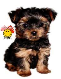 902 Meilleures Images Du Tableau Chiens En 2019 Cute Puppies Pets