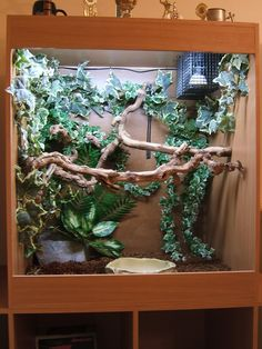 Not a big fan of the vines, but I do love the wood perches! gorgeous and perfect natural perch for green tree pythons. Reptile Habitat, Reptile Room, Reptile Cage, Crested Gecko Vivarium, Crested Gecko Habitat, Chameleon Enclosure, Snake Enclosure, Reptiles, Amphibians