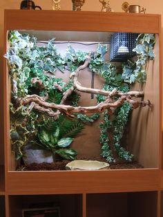 Amazon Tree Boa Enclosure | Website - www.AS-Exotics.co.uk