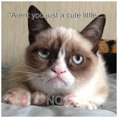 Grumpy cat frowns on your shenanigans. Grumpy cat is not impressed. I wonder if grumpy cat is an engineer. I did find some Grumpy Cat gifs: Grumpy Cat say \ Grumpy Cat Quotes, Meme Grumpy Cat, Gato Grumpy, Funny Cat Memes, Funny Cats, Funny Animals, Cute Animals, Grumpy Kitty, Funniest Animals