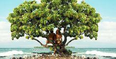 Mauna Lani - Big Island of Hawaii.  My FAVORITE!