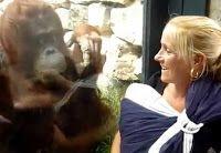 """""""O GRITO DO BICHO"""": O orangotango só quer ver o bebê"""