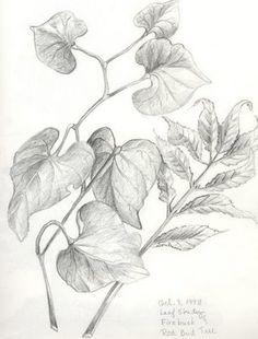 vine+w-leaves-pict.jpg (304×400)