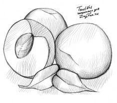 Как нарисовать персик карандашом 4