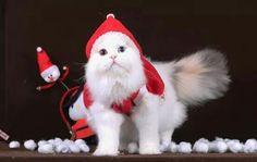 Christmas Kitten, Christmas Ornaments, Holiday Decor, Christmas Jewelry, Christmas Decorations, Christmas Decor