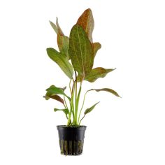 The right aquarium plants