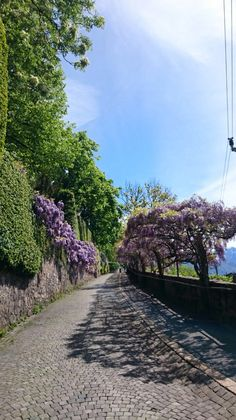 Vevey, Switzerland Vevey, Garden Club, Lausanne, Switzerland, Travel Guide, Paradise, Places To Visit, Sidewalk, Country Roads