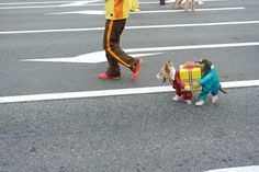 A small dog dressed as two even smaller dogs carrying a present.