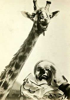 Circus clown and giraffe 1940's