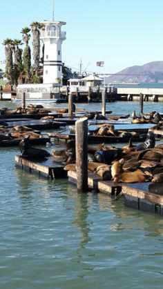 The sealions hanging out on the west side of San Francisco's Pier 39.