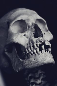 Skull via Red Medusa in Photography - Black & White