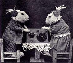 In the old days, bunnehz hung on to the Presidbun's every word. #rabbit #rabbits #rabbitlove #rabbitlife #bunny #bunnylove #bunnyrabbit