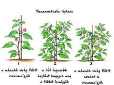 Types Of Urban Gardening - Urban Gardening Potager Garden, Fruit Garden, Vegetable Garden, Permaculture, Organic Gardening, Gardening Tips, Plant Markers, Plantation, Growing Vegetables