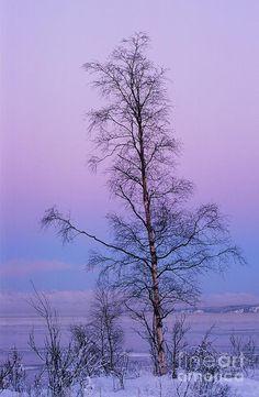 ✯ Lone tree at winter sunset