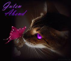 Die 681 Besten Bilder Von Katzen In 2019 Buen Dia Good Day Und
