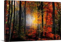 Light Colors 180.00