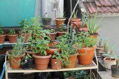 Herb gardening at home