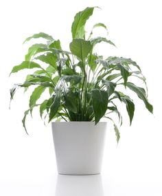 5 Best Plants For Your Office
