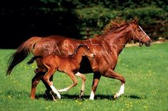 2 running horse clouds | Buy Mare & Foal Art Poster - Easyart.com