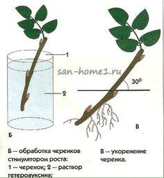 (58) Одноклассники Hair Accessories, San, Plants, Life, Image, Beauty, Gardening, Lawn And Garden, Flora