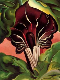 Jack-in-the-Pulpit II, 1930 by Georgia O'Keeffe. Precisionism. flower painting