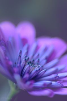 delicate by Visions_by_Dany on 500px