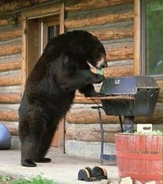 I wish I had a friend like this to watch over the grill and maintain temp while you got the table set for dinner. Is that a beer he has in his hand/paw too? I love it!! . . Shout out to @hunterbrothers. . . . #Foodie #Beef #Foodstagram #FoodPics #Carnivore #Barbecue #Barbeque #BBQ #BBQPorn #PornFood #Meat #MeatLover #Steak #SteakLover #Grilling #Grill #GrillMaster #Churrasco #Churras #Asado #FoodPorn #FoodPornShare #FoodPornography #BBQLife #GrillLife #GrillingOut #NomNom #Bear #BlackBear…