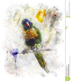 watercolor-image-parrot-rainbow-lorikeet-digital-painting-44073917.jpg (1127×1300)