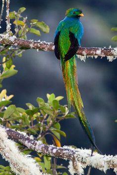 Quetzal, a majestic bird of Central America « Jaroslav Zákravský Photography